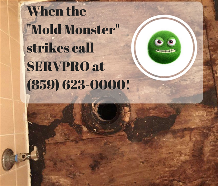 "Mold Remediation  Madison, Rockcastle, Garrard, and Lincoln County Residents: Is the ""Mold Monster"" trying to take over your home or business?"
